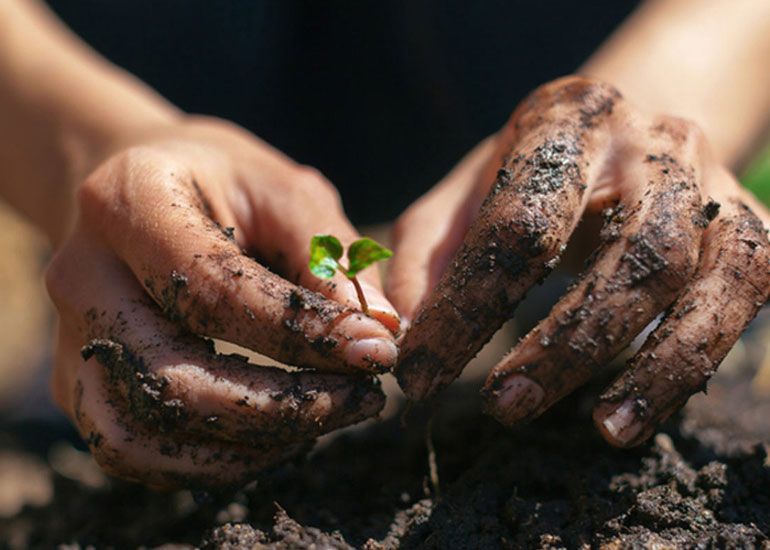 Get Your Hands Dirty: 5 Ways Gardening Can Improve Your Health